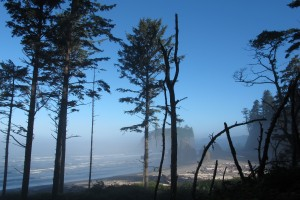 Olympic National Park 064