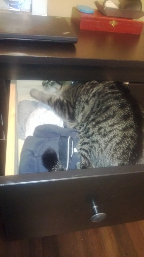 Sneaking into Alex's underwear drawer while I do laundry.
