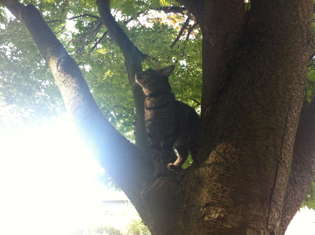 No big deal - Henry can climb trees