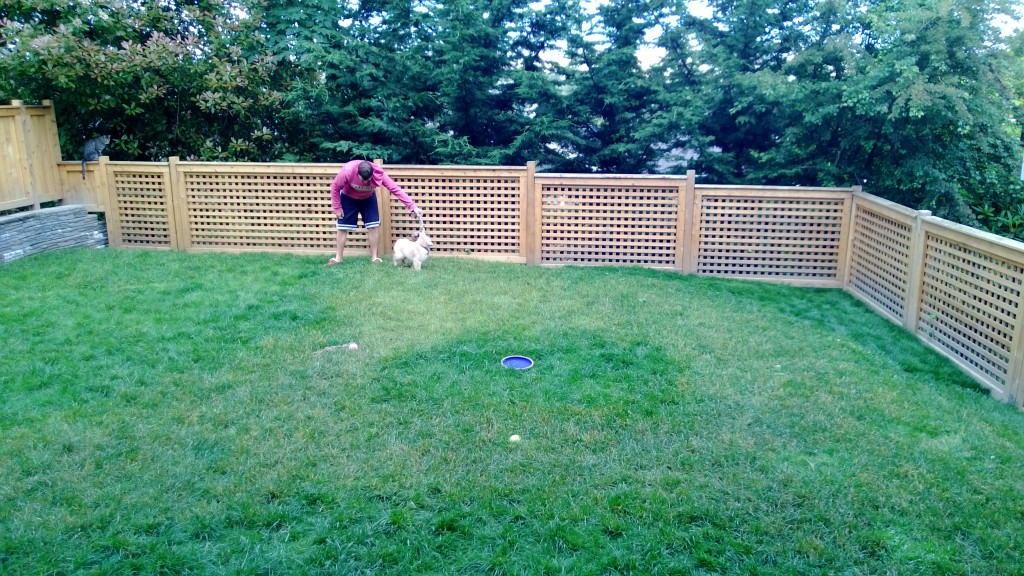Jackson and Alex playing in the backyard! The grass is finally starting to fill in and it looks like a fluid yard now.