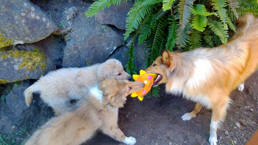 Sharing the toy??