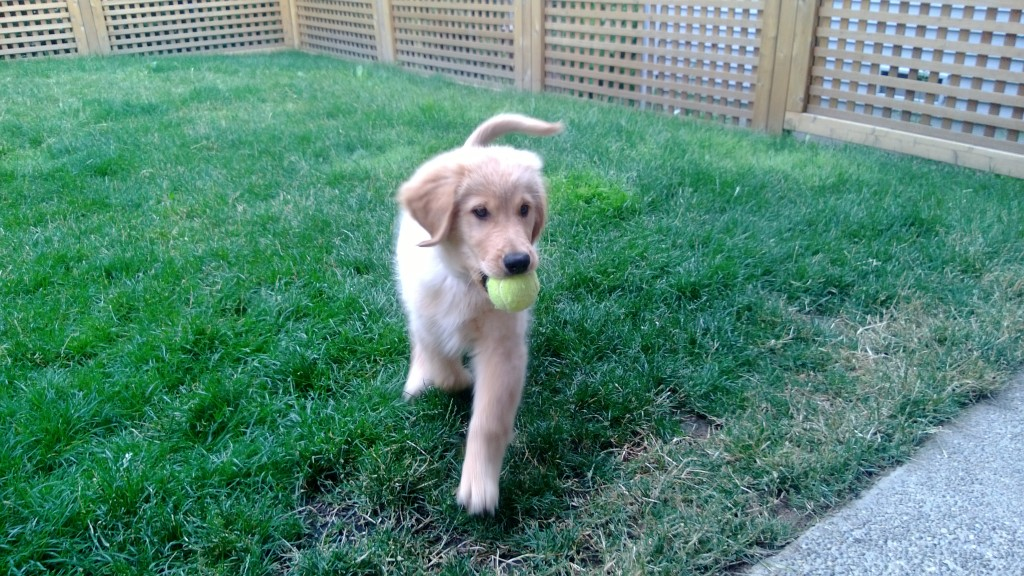 Showing a little interest in tennis balls/playing fetch.