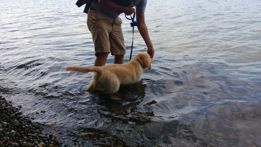 Easing his way into the water...