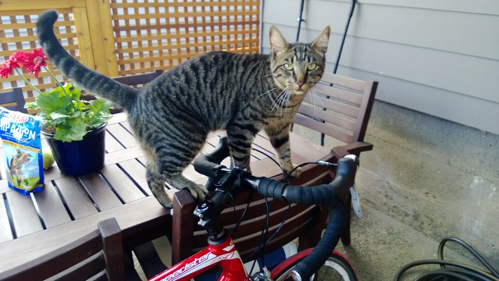 I think Henry wants to go for a bike ride :)