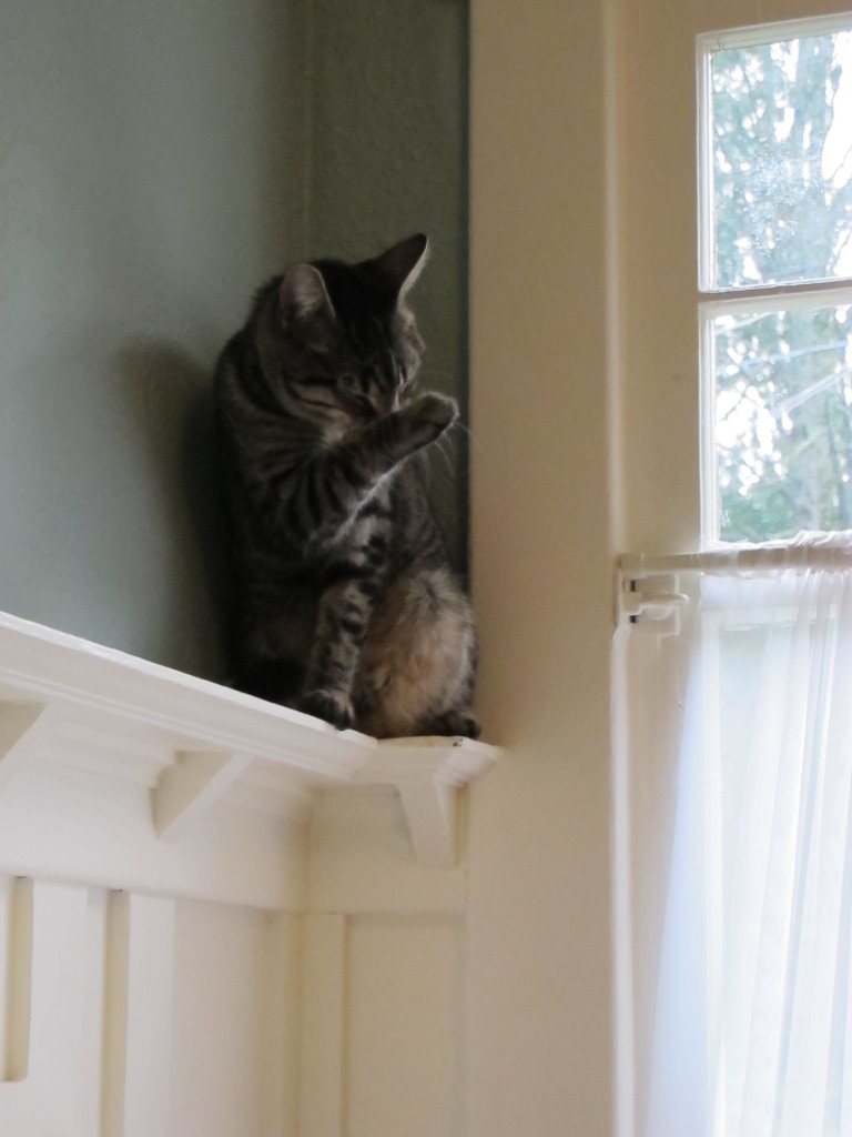I can still see him sitting up here, perched on the rail, looking out the window.