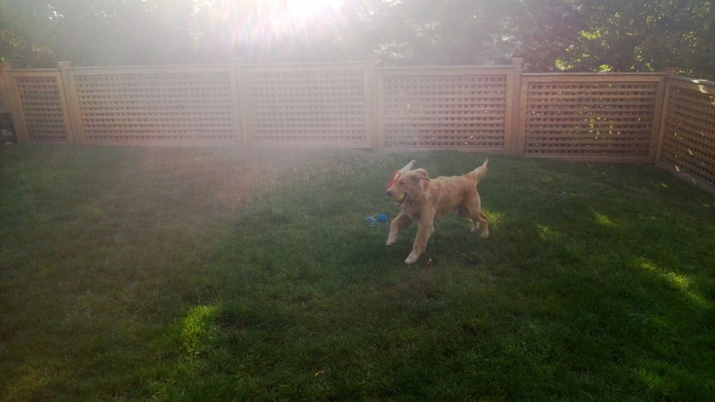 Sometimes we can even get him to play fetch in the backyard.