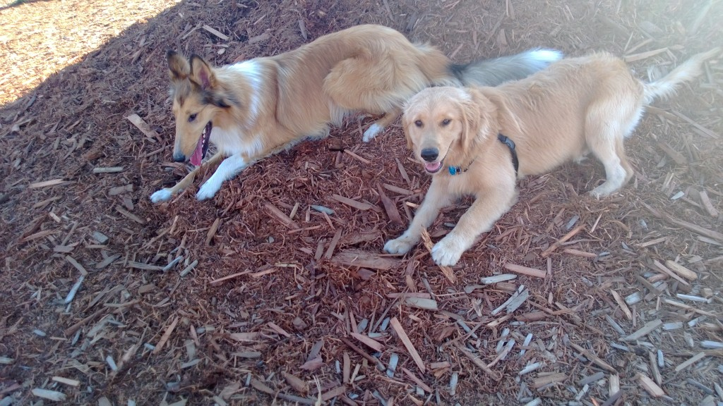 Jackson and Emma's play date at the dog park!