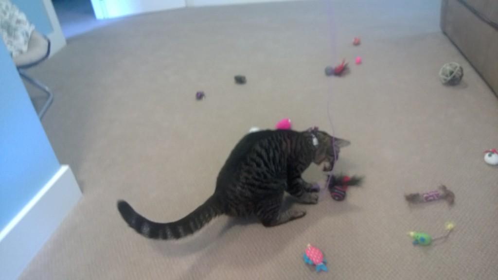 Henry has sooooo many toys!