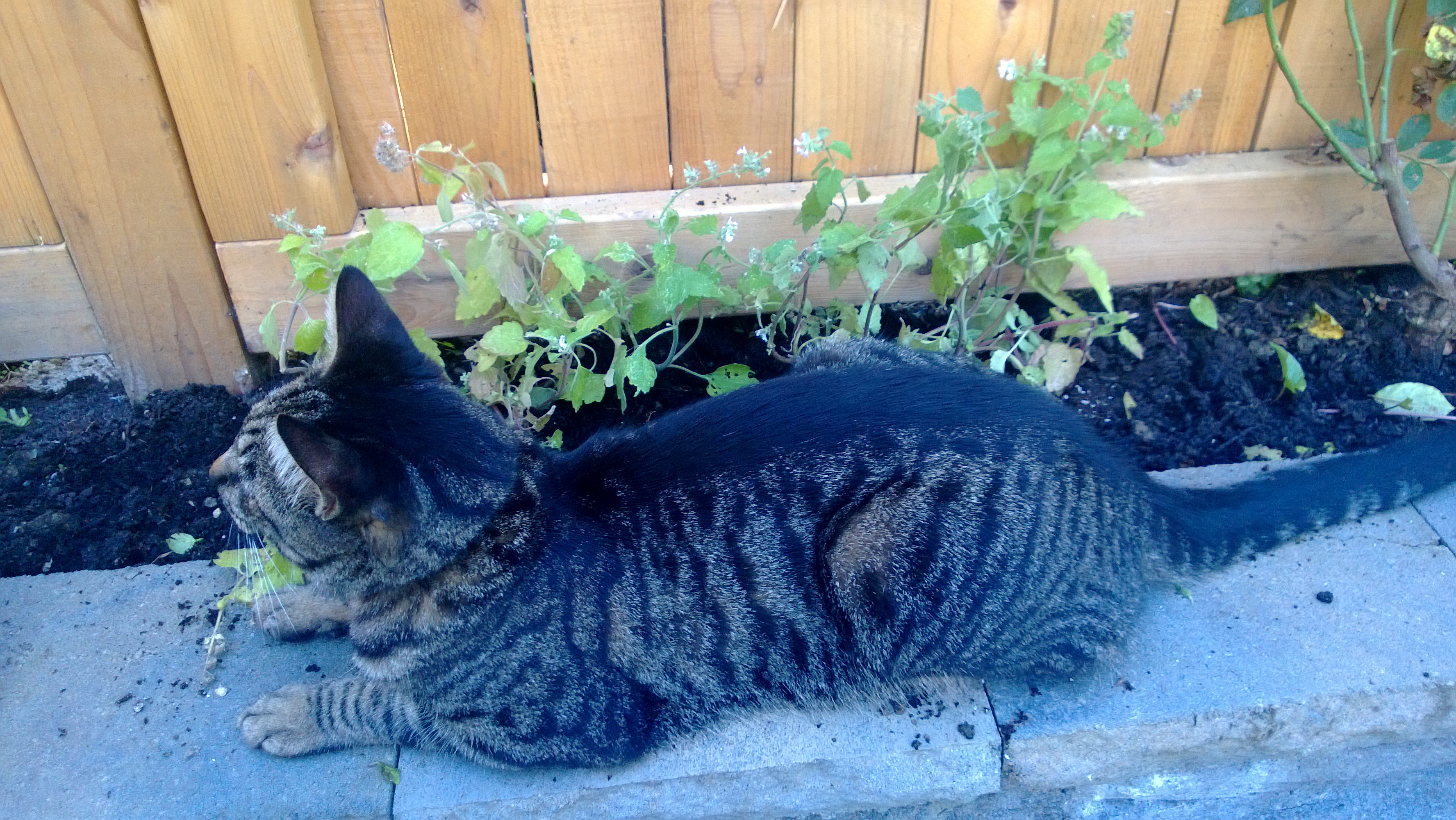 how to get high on catnip