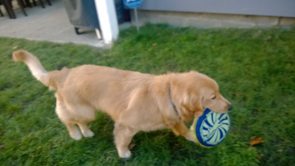 He is starting to become interested in his frisbee.