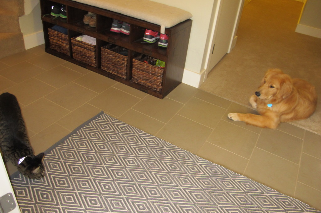 Jackson and Henry sure like the new tile and rug!
