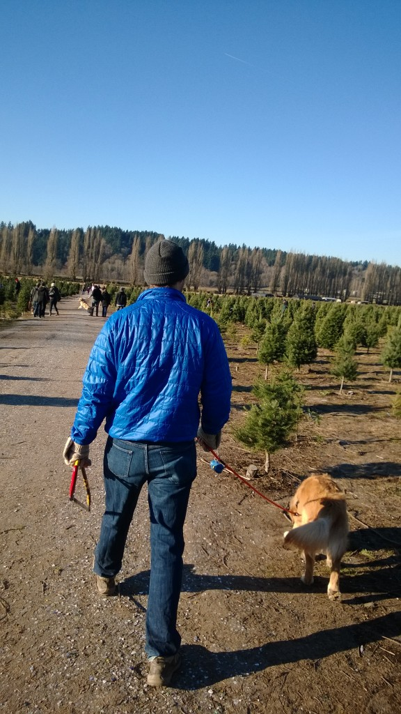 Looking for our perfect tree.