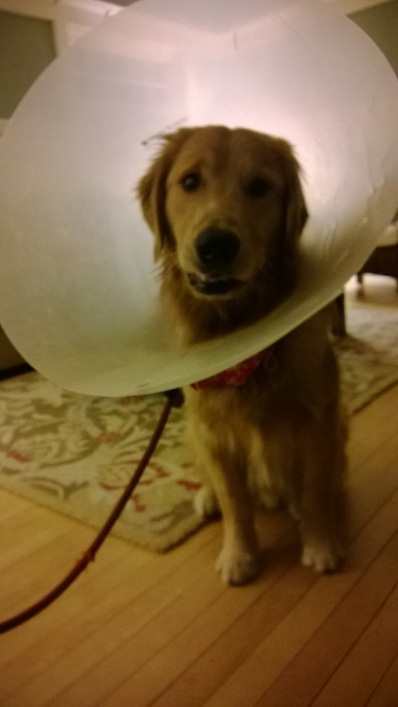 His last day with the cone!