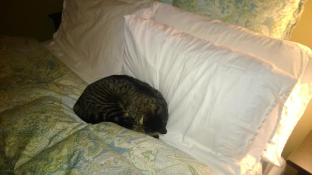 Henry cat!