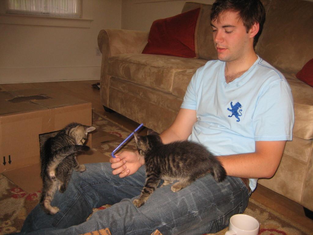 Kittens 030