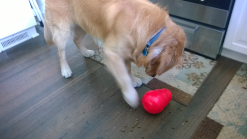 Katie recommended this Kong Wobbler for Jackson - it is bigger than my hand and fits one of his meals in it. He knocks it over with his nose or paw and it dispenses his kibble. This allows him to work for his food and scavenge for it, which helps him meet his drive needs.