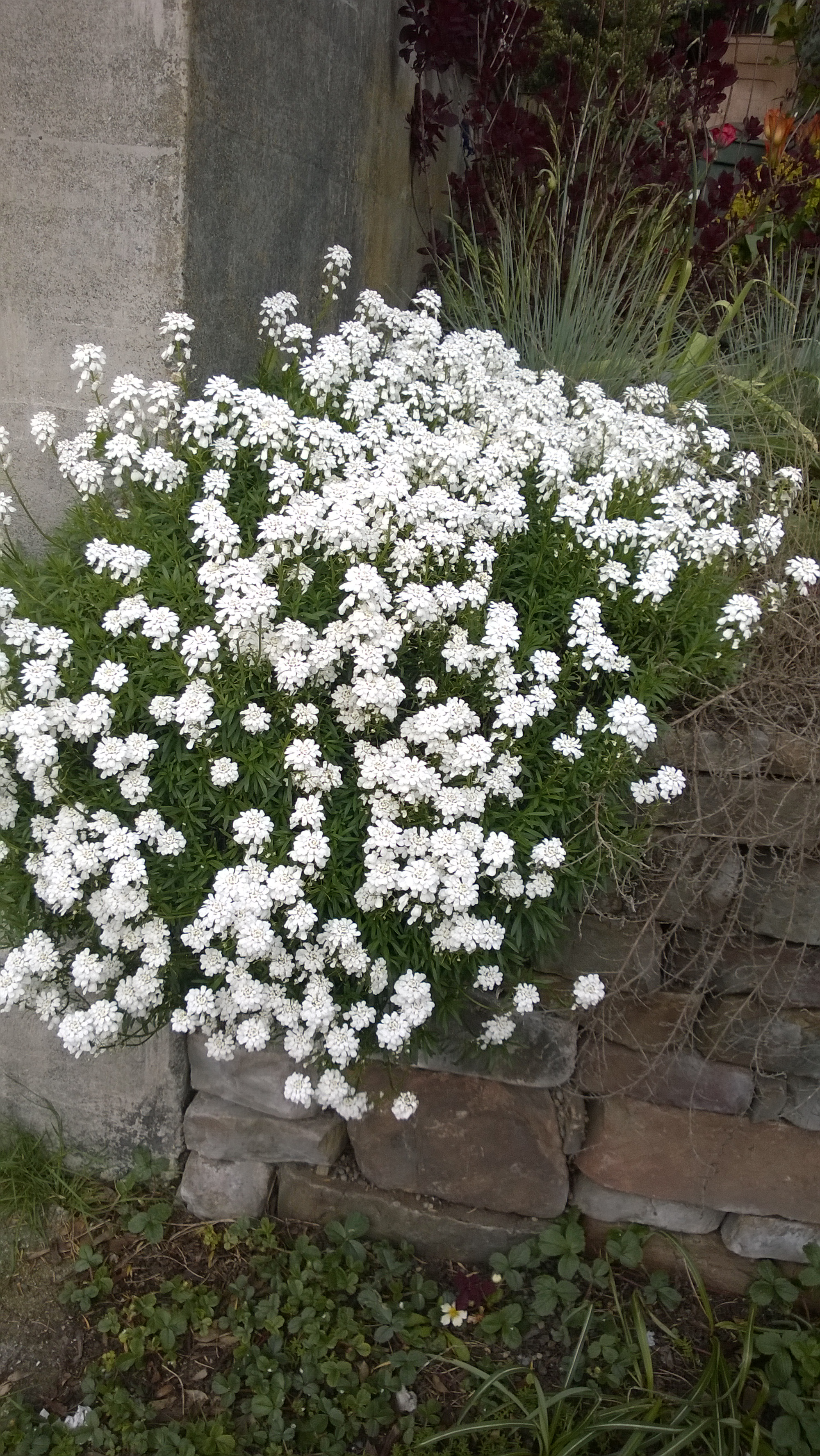 What Are The Little White Flowers Called 1000