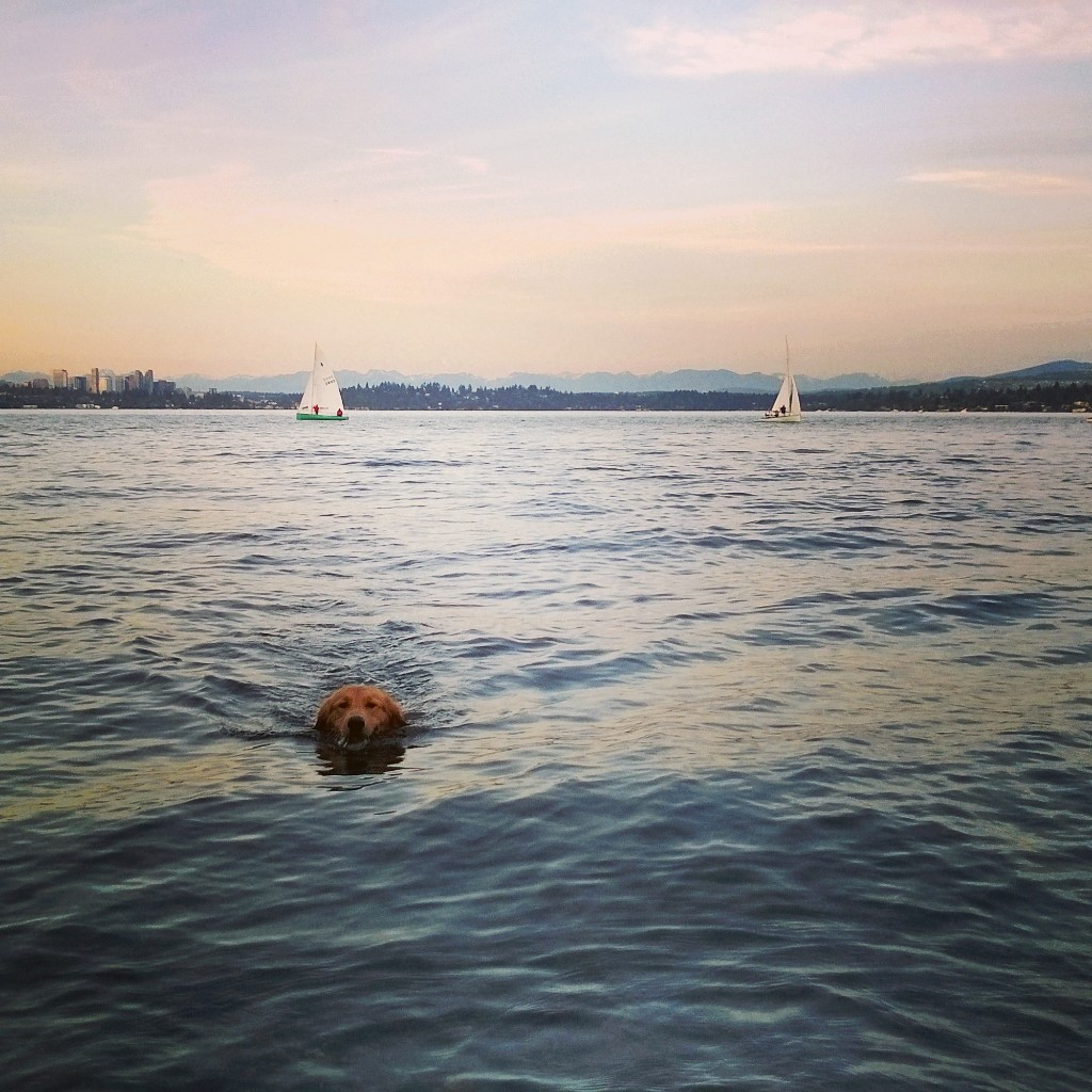 {The wonderful weather brought us many trips down the hill to Lake Washington to take Jackson swimming}