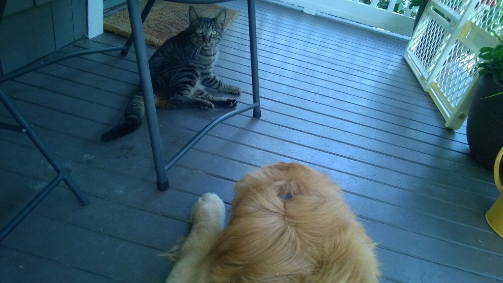 Hanging out together on the porch.