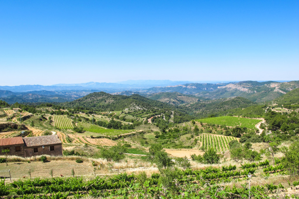 {overlooking the Priorat wine region}