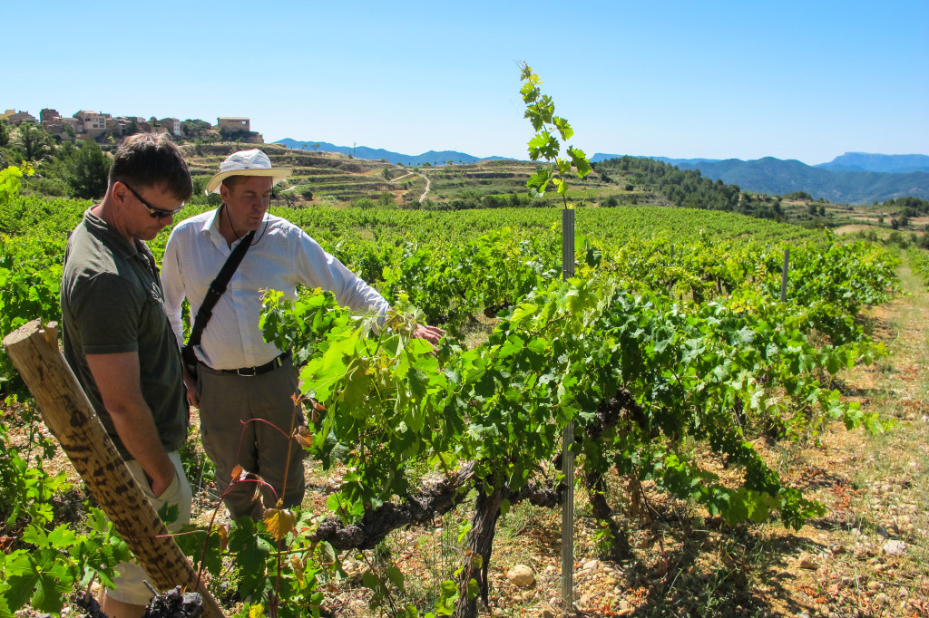 {our guide and another wine drinker inspecting the old vines}