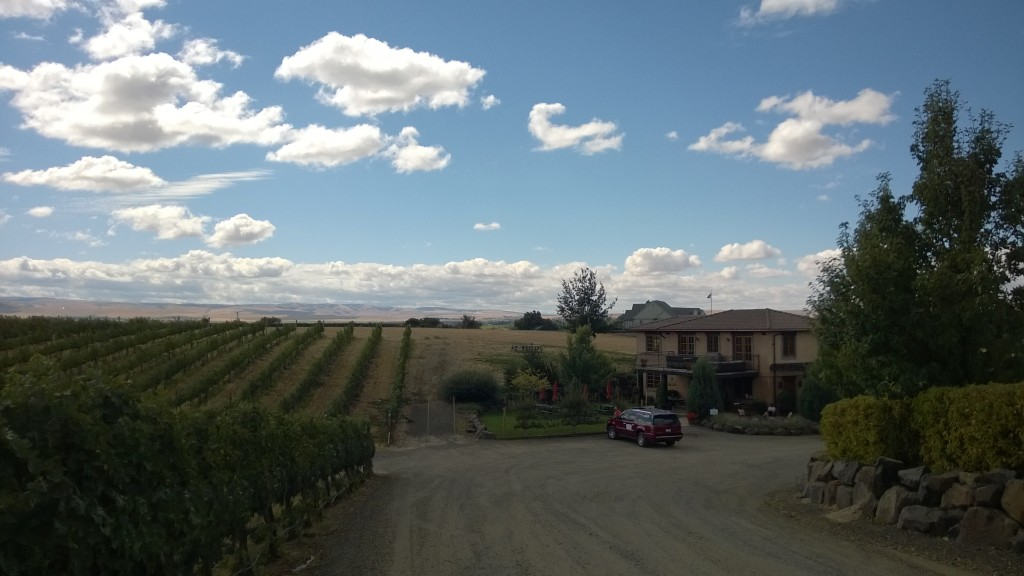 {gorgeous wine country - this is the view from one of the wineries}