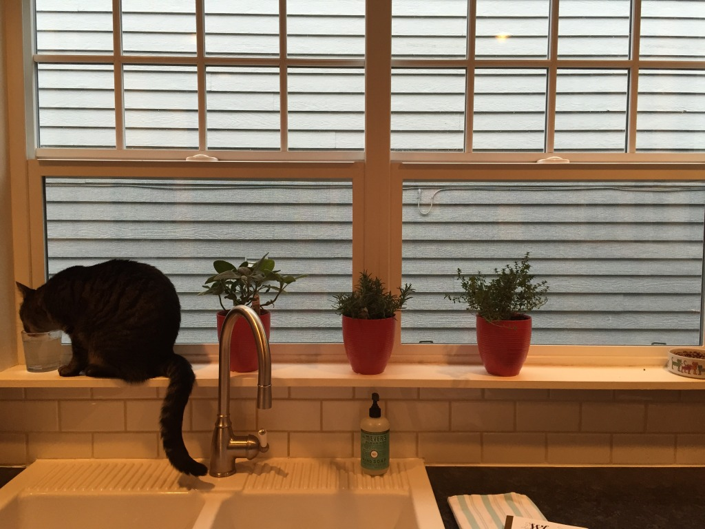 {Random photo... we got these cute little pots for growing herbs in our kitchen.}