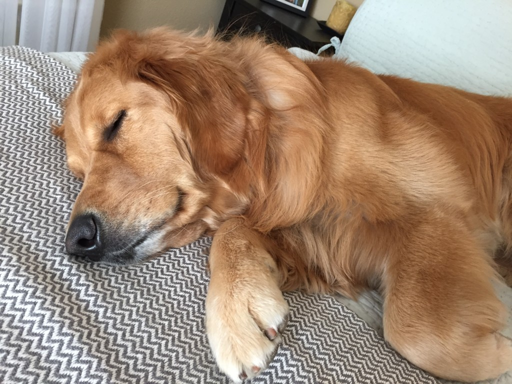 {and this is him not caring that he's not allowed on the bed...}