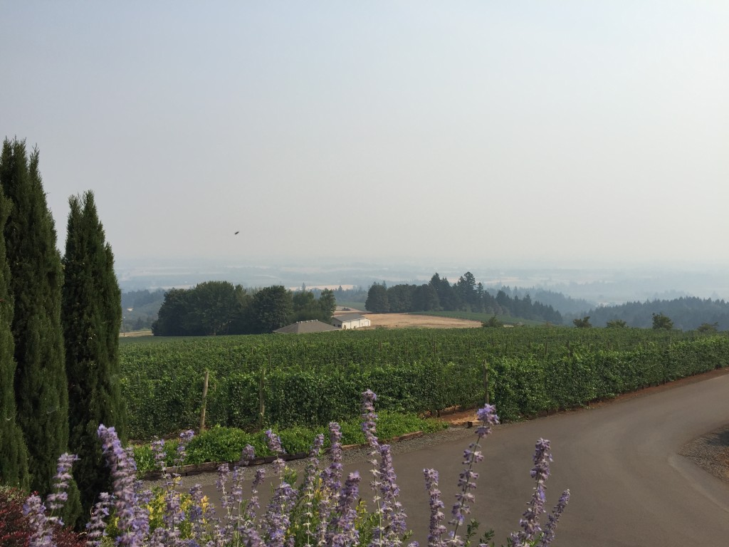 {Hazy view from White Rose winery}