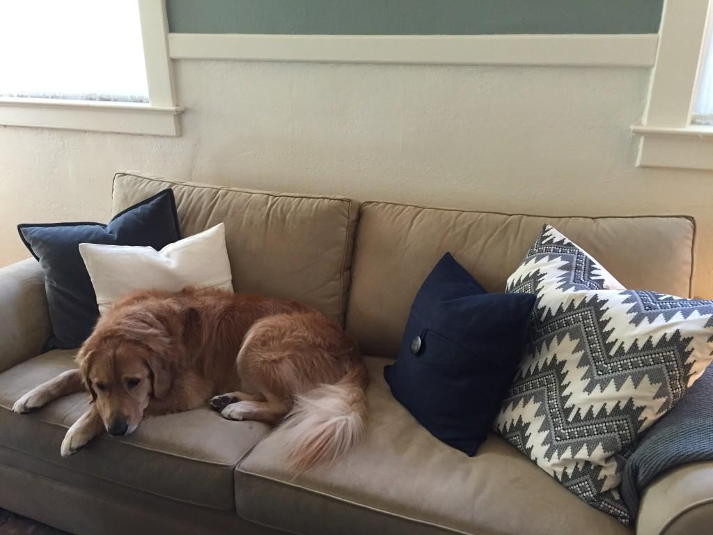 {Jackson claimed the new pillows on the sofa}