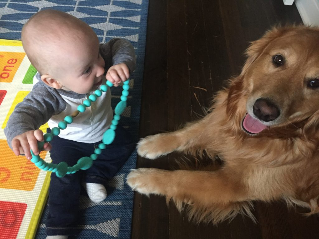 {This boy and his dog are inseparable! Ben loves feeding Jackson, petting him and giggling at him. Somehow, Jackson remains amused!}